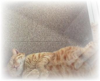 猫のお昼寝写真と、月末に追加する小型ハープ音源について