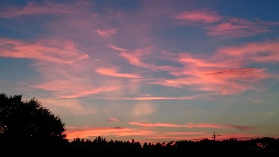 今日は夕焼けがとても綺麗でしたネ。
