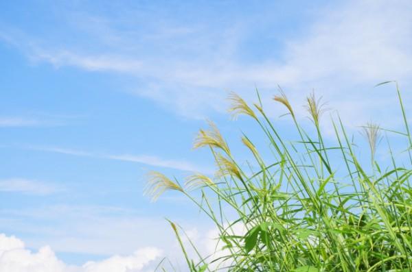 ハープ楽譜のムジカオンラインショップお茶け会「11月」 上野散策マップが完成する。