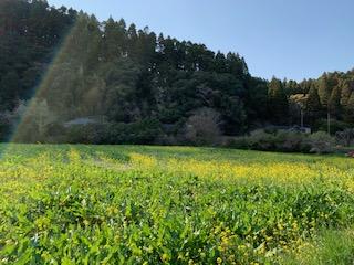4月3日FM江戸川 レモン色の五重奏(クインテット)17:00~17:25分レバーハープで出ています。