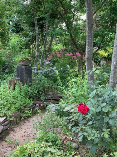 日常:母&弟の共同作品 イングリッシュガーデン風の庭づくり
