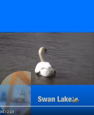 レバーハープ動画(白鳥の湖)をご紹介します。skoratisukaさん