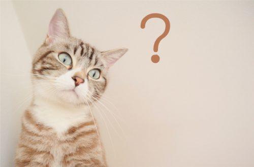 9/29日のブログで募集した質問コーナーは、今日の夜中0時で締め切り致します。